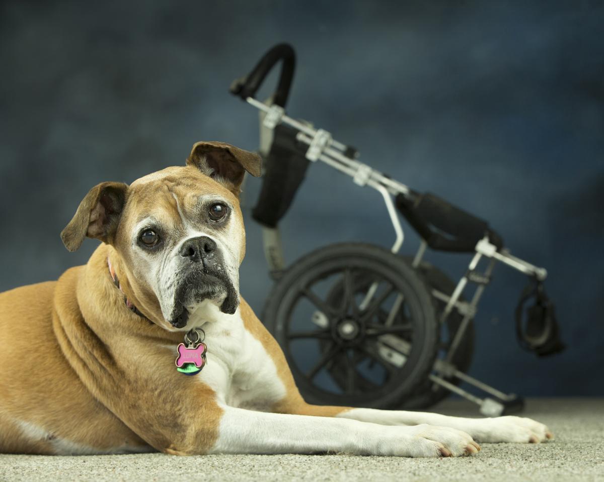 Luna - Dog Jog Poster Pup!